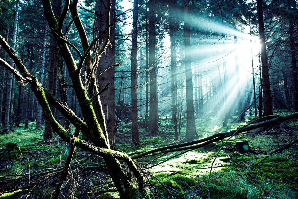 Baden Baden y la Selva Negra