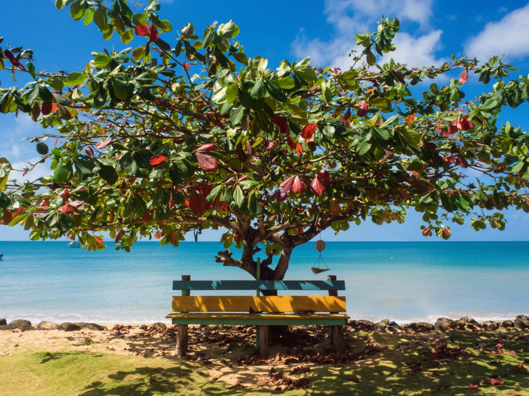 tree and colorful bench by water nicaragua